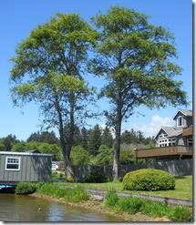 Tree Study, Nature, Elm, Summer