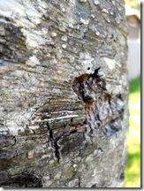 Tree Study, Nature, Elm, touch bark