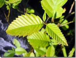 Tree Study, Nature, Elm, Smell, Perfume