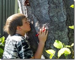 Tree Study, Nature, Elm, Smell