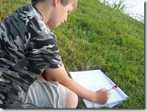 Tree Study, Nature, Elm, Sketch