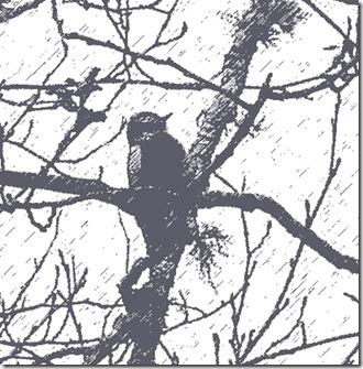 Downy-Woodpecker-1