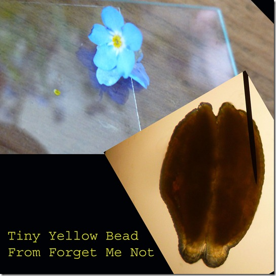 Forget-Me-Not-Yellow-Bead