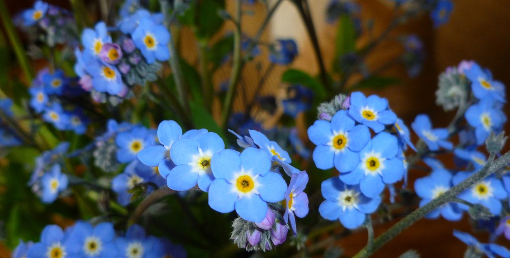 Spring flower studylearning the parts pebblekeeper forget me nots mightylinksfo Image collections