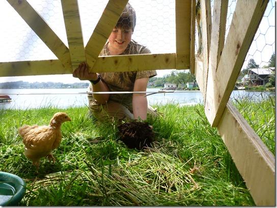 Small Chicken Tractor