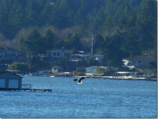 Eagle Lake Feeding 2