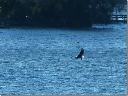 Eagle Lake Feeding 4 Nature Blog