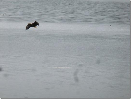 Eagle Lake Feeding fly