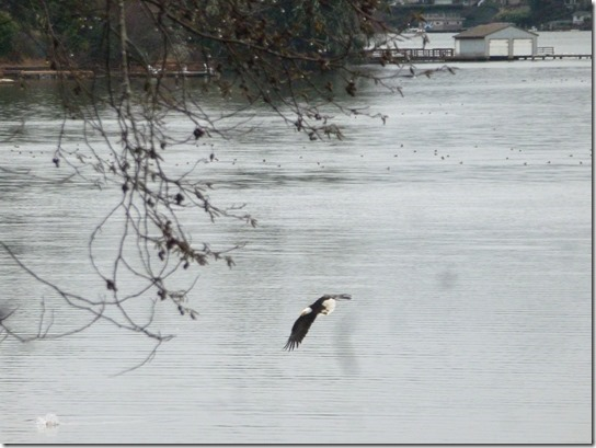 Eagle Lake Feeding bird