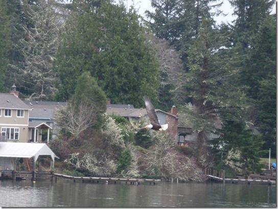 Eagle Lake Feeding